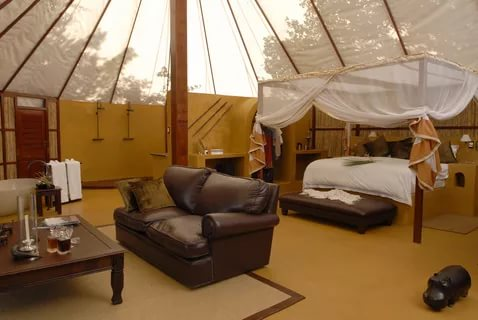 Image of: Safari Bedroom Images best
