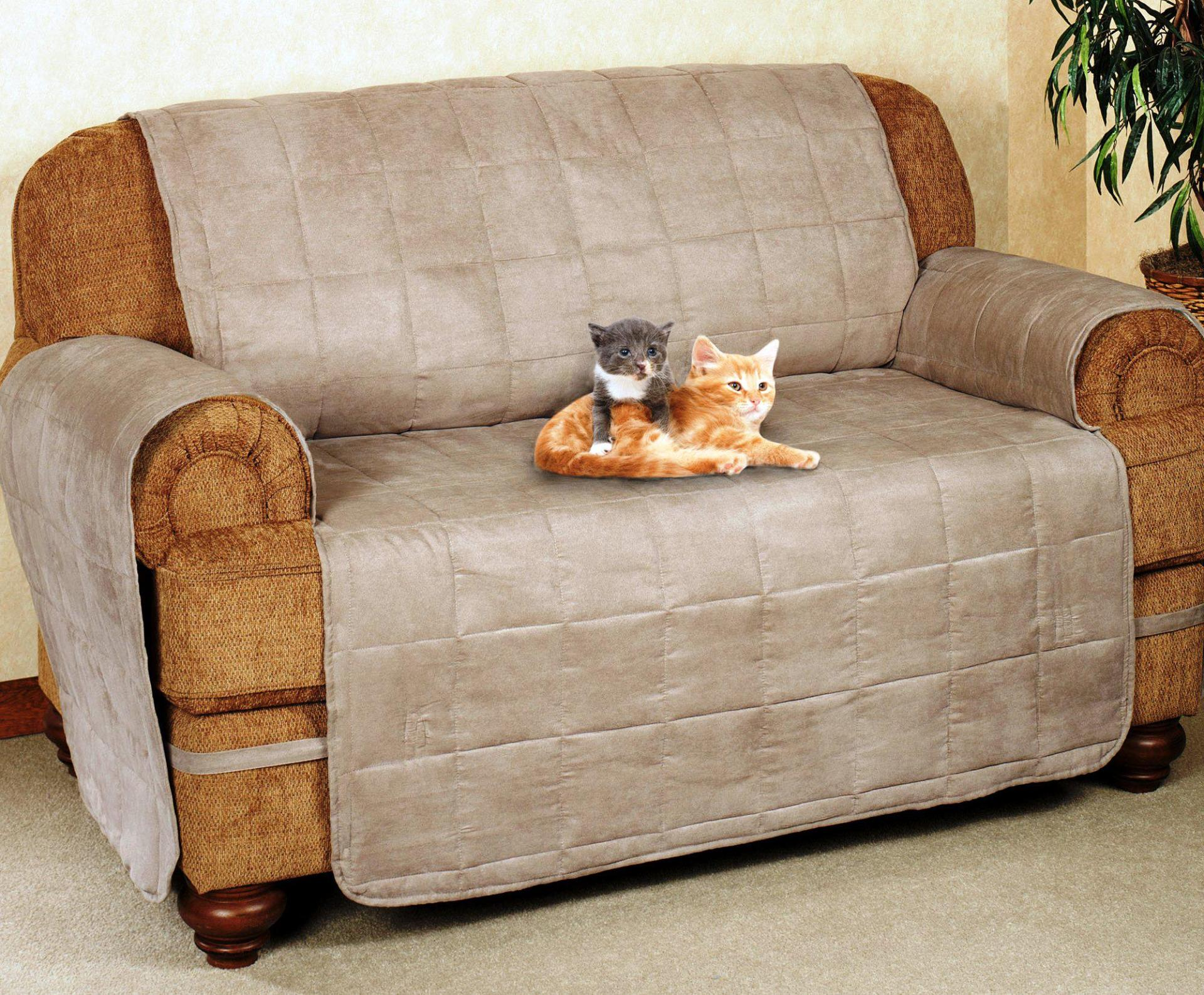 Image of: Couch Protector From Cats