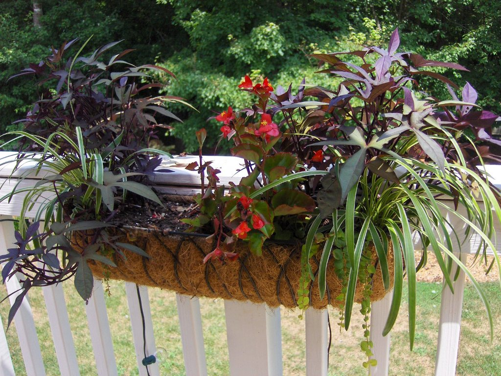 Image of: Deck Plant Hangers Style