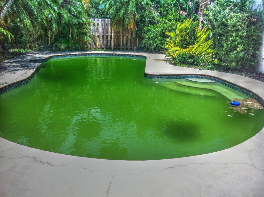 Image of: Pool Skimmer Replacement