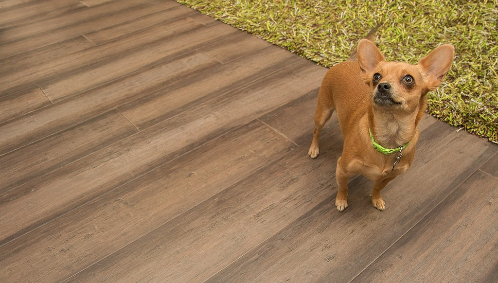 Image of: Cali Bamboo Flooring Dogs