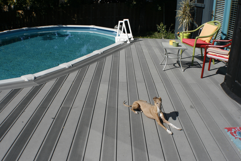Image of: Cali Bamboo Flooring and Dogs