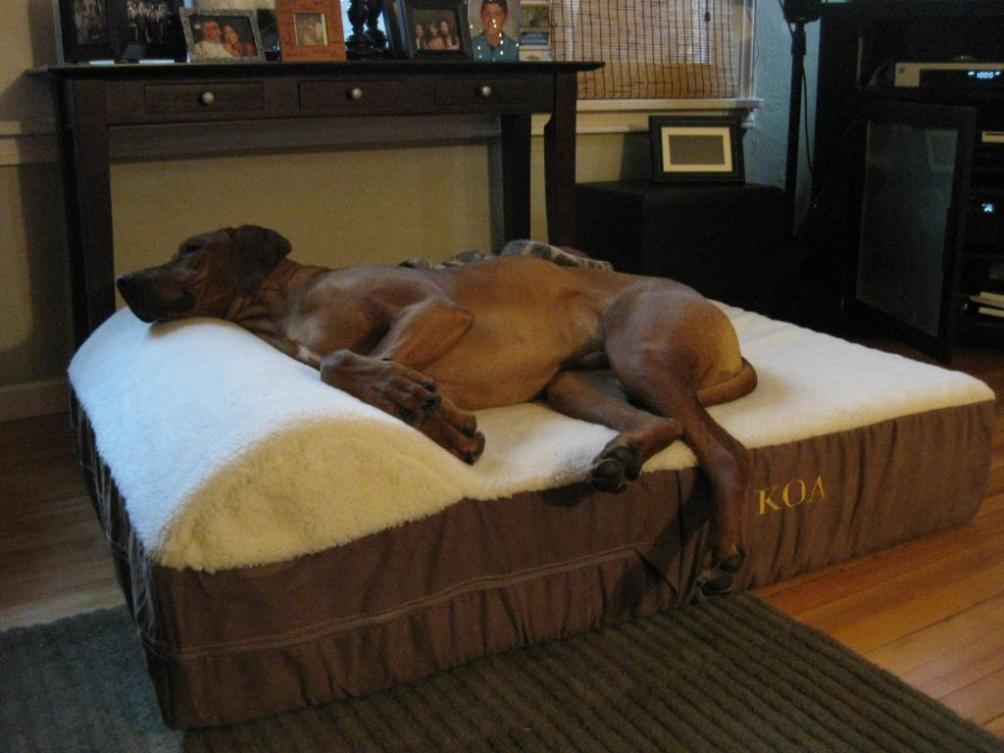 Image of: Orthopedic Dog Beds For Extra Large Dogs